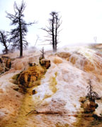 Mammoth Hot Springs - Click to view details
