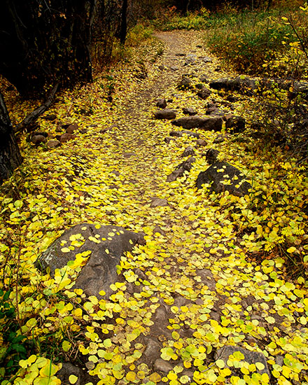 Yellow Trail